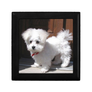 Toy Dogs Gift Box