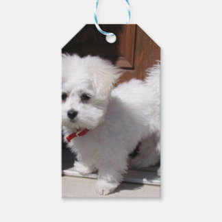 Toy Dogs Gift Tags
