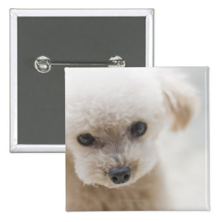 toy poodle 2 inch square button