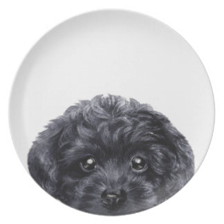 Toy poodle  black, plate