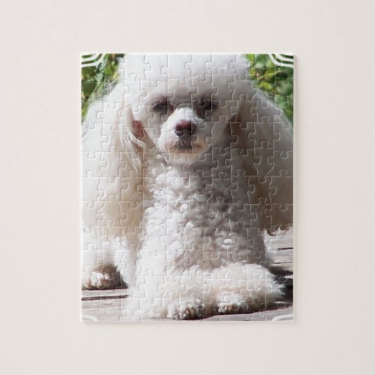 Toy Poodle Jigsaw Puzzle