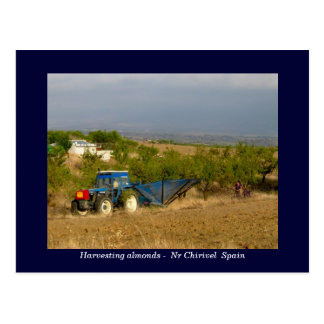 Tractor harvesting almonds rural Spain Postcard
