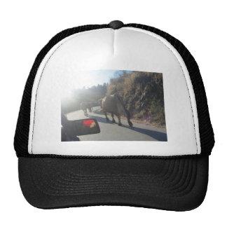 Traffic a cow? trucker hats