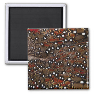 Tragopan Breast Feather Abstract Magnet