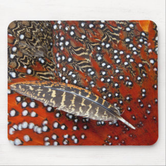 Tragopan feathers close-up mouse pad