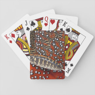 Tragopan feathers close-up playing cards