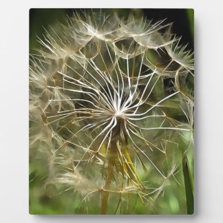 Tragopogon Flower Salsify Plaque