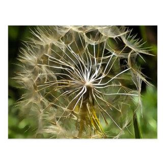 Tragopogon Flower Salsify Postcard