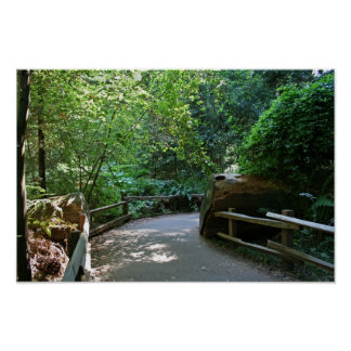 """Trail Break"", Muir Woods Poster"