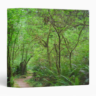 Trail in Redwood Forest 3 Ring Binder