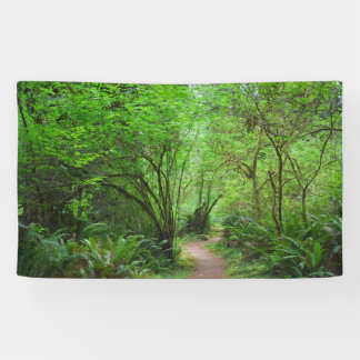 Trail in Redwood Forest Banner