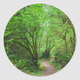 Trail in Redwood Forest Classic Round Sticker