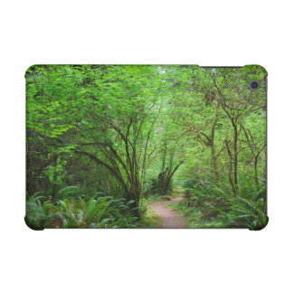 Trail in Redwood Forest iPad Mini Cases