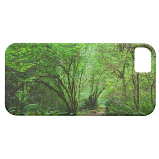 Trail in Redwood Forest iPhone 5 Cases