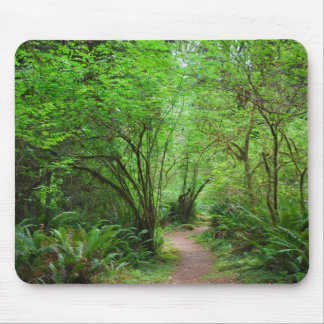 Trail in Redwood Forest Mouse Pad