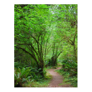 Trail in Redwood Forest Postcard