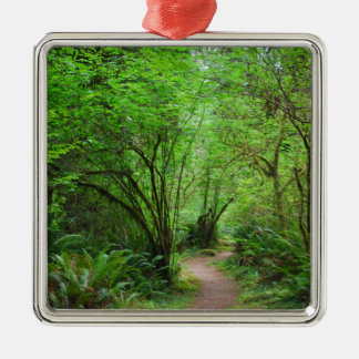 Trail in Redwood Forest Silver-Colored Square Ornament