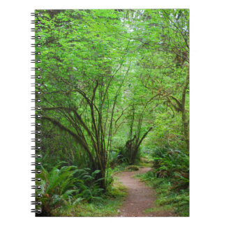 Trail in Redwood Forest Spiral Notebooks