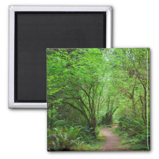 Trail in Redwood Forest Square Magnet
