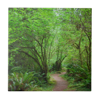 Trail in Redwood Forest Tile