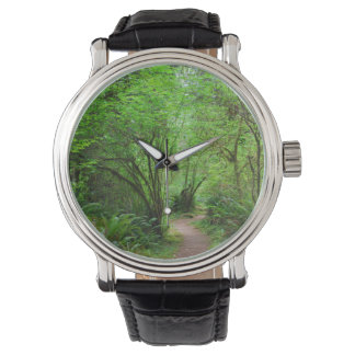 Trail in Redwood Forest Watch