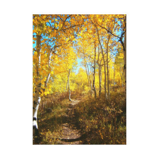 Trail Of Aspens Canvas Print