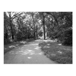 Trail through the Woods Postcard