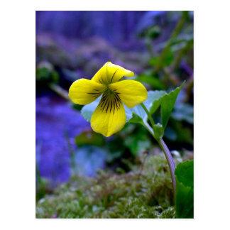 Trailing Yellow Violet 01 Postcard