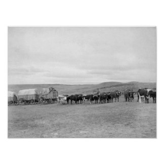 Train of Oxen and Wagons Headed for Black Hills Poster