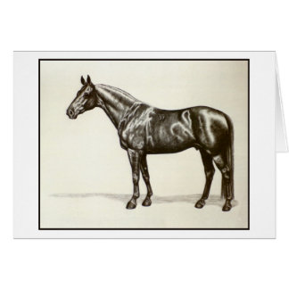 Trakehner Stallion Card