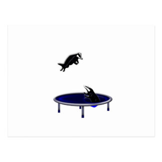 trampolining badgers postcard