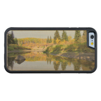 Tranquil Carved® Maple iPhone 6 Bumper