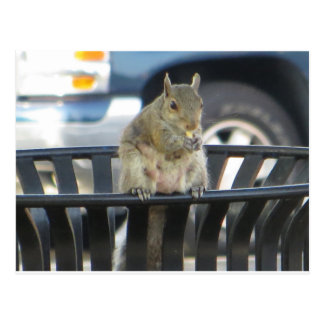 Trashcan Squirrel Postcard