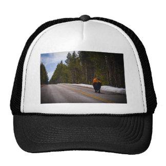 Traveling Buffalo Trucker Hat