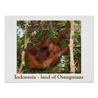 Traveling the Land of Orangutans Poster