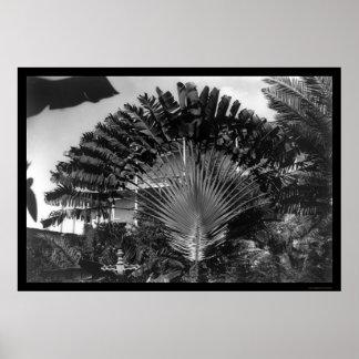 Travellers Palm Tree Kenya 1920 Poster