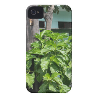 Treasure nostalgia today in Cuba telephone booth iPhone 4 Cases