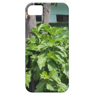 Treasure nostalgia today in Cuba telephone booth iPhone 5 Cases
