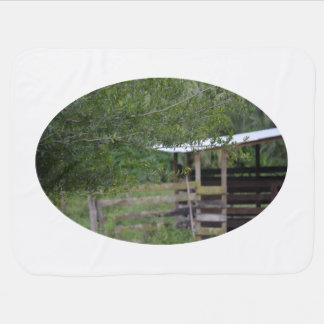 tree and old barn florida photo baby blanket
