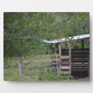 tree and old barn florida photo plaque