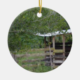 tree and old barn florida photo round ceramic ornament