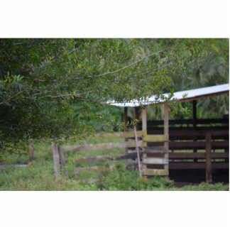 tree and old barn florida photo standing photo sculpture