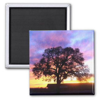 Tree at Sunset Magnet
