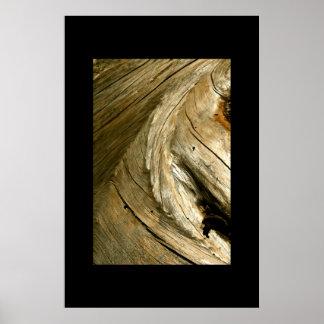 TREE BARK DETAIL POSTER