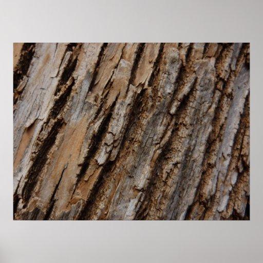 Tree Bark I Natural Abstract Textured Design Poster