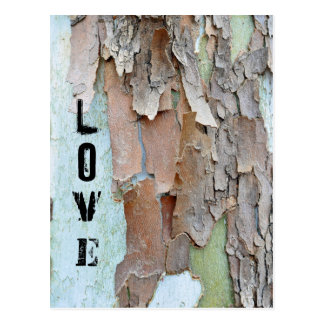 Tree Bark, Love, Rustic Postcard