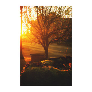 Tree basked in the early morning sun Niles MI Canvas Print