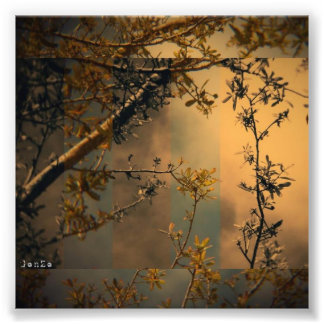 Tree Branch Photo Print