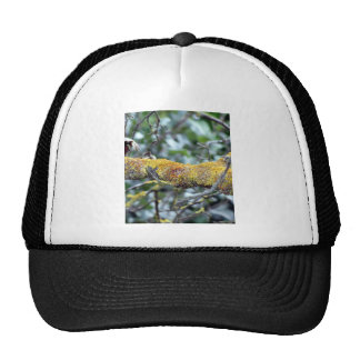 Tree branch with moss fungus trucker hat