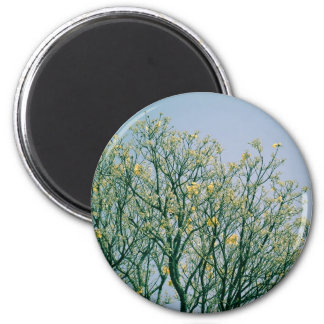 Tree Branches and Yellow Blossoms Magnet